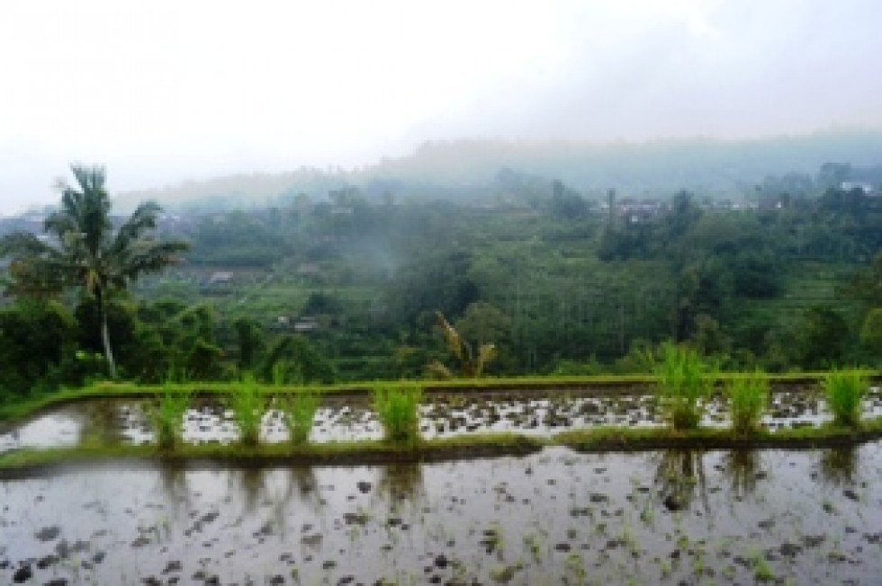 Land for sale in Bedugul Bali refreshing view rice fields – LBE033