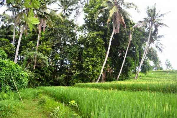 Land for sale in Canggu Bali to built your dream villa – LCG082