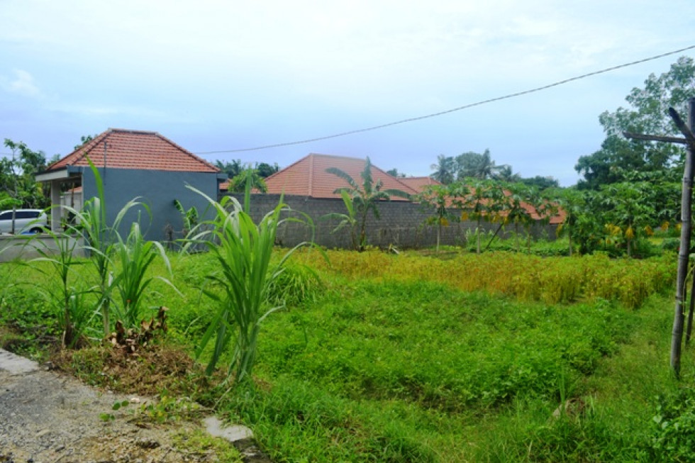 Land for sale in Canggu Bali good price perfect for villa – LCG087