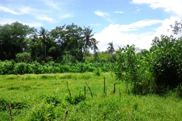 Land for sale in Canggu flat, lush and affordable price – LCG089