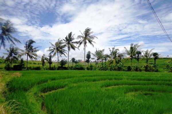 Land for Sale in Canggu hidden beauty in Tumbak Bayuh – LCG088