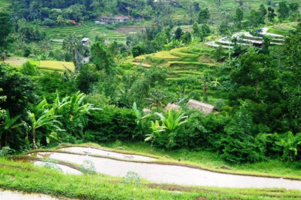 Land for sale in Tabanan mountain and rice fields view – LTB013