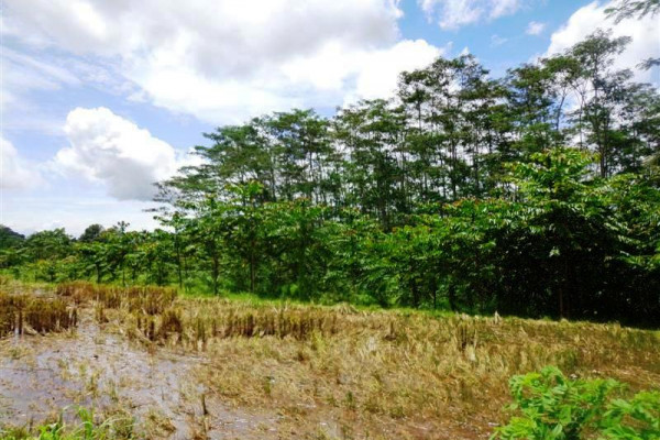 Land for sale in Tabanan mountain view by the hill – LTB015