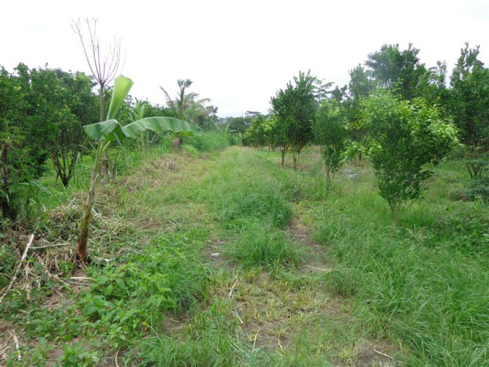 Land for sale in Ubud Bali magnificent view in Tegalalang – LUB156