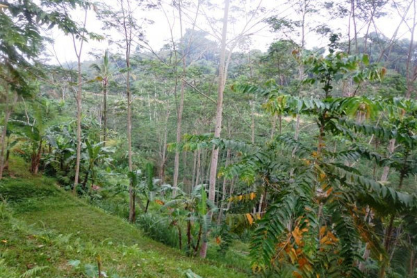 Land for sale in Ubud Bali hidden beauty realizing your dream villa – LUB163