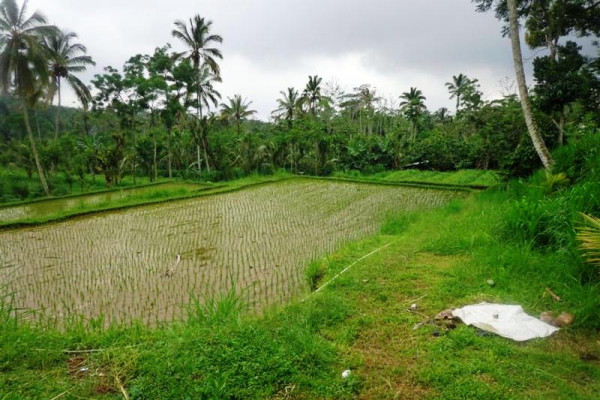 Lush Land for sale in Ubud Bali delightful view ricefields – LUB164