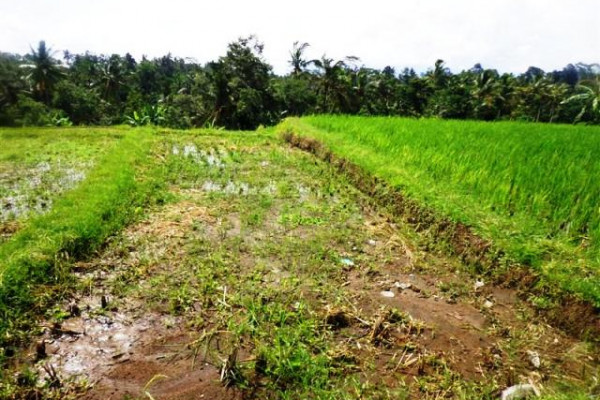 Land for sale in Ubud Bali georgeous view in Tegalalang – LUB168