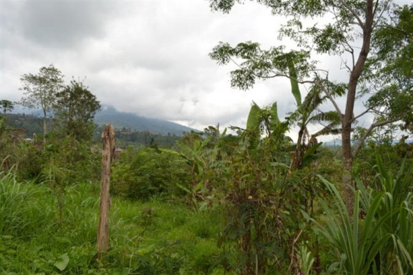 Land for sale in Bedugul Bali – TJBE012