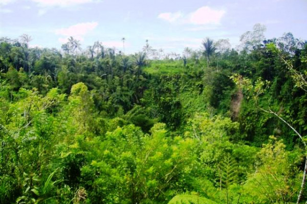 Land in Payangan Ubud 2 Ha with stunning view by the river valley – TJUB073