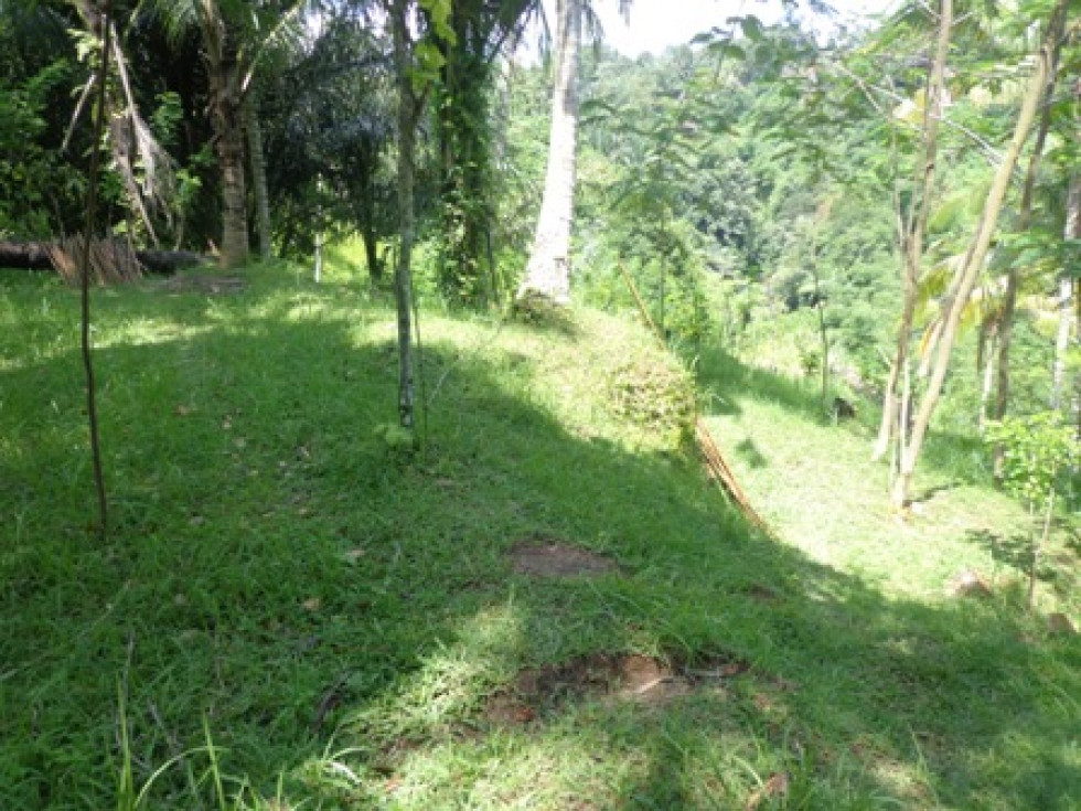 Land for sale in Ubud Bali green valley near the Ubud center – LUB178