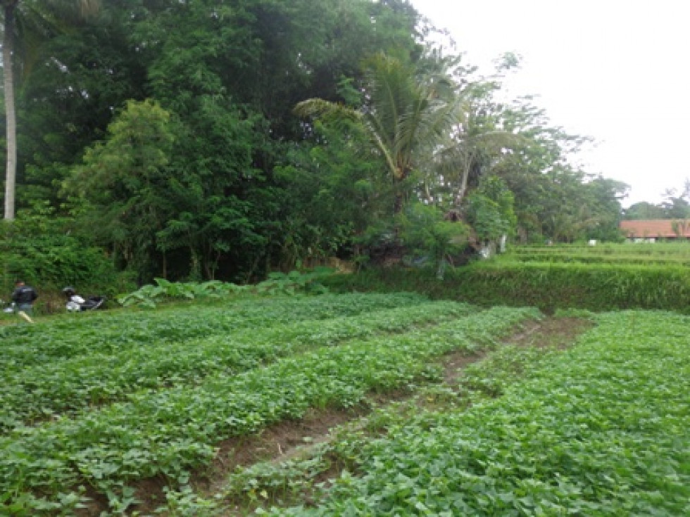Land for sale in Ubud Bali By the roadside Close to Ubud Centre – LUB173