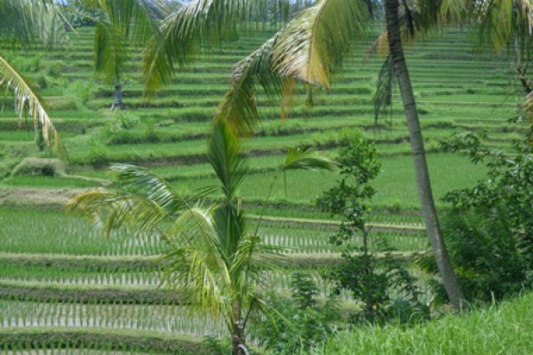 Land for sale in Ubud Bali Stunning Terraced rice fields – LUB176
