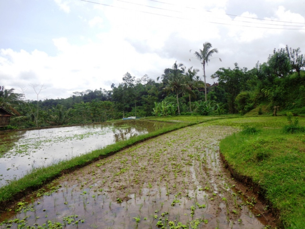 Land for sale in Ubud Bali jungle and river view in Tegalalang – LUB189