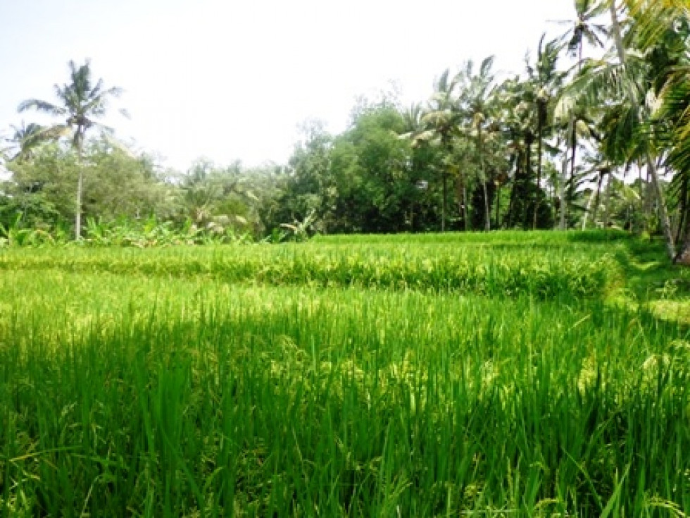 Land for sale in Ubud Bali a slice beauty of Pejeng – LUB190
