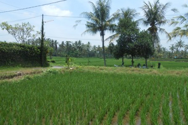 Land for sale in Ubud Bali opportunity to own a slice beauty of Ubud – LUB186