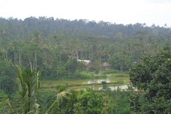 Land for sale in Ubud Bali Hidden beauty in Tegalalang – LUB187