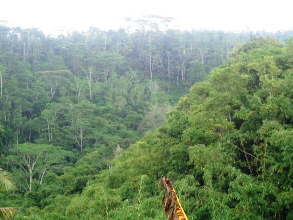 Land for sale in Ubud green jungle view on the valley – LUB188