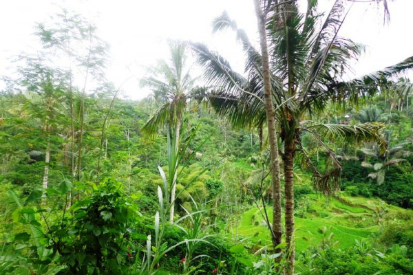 Ubud Land sale 120 Ares with by the river