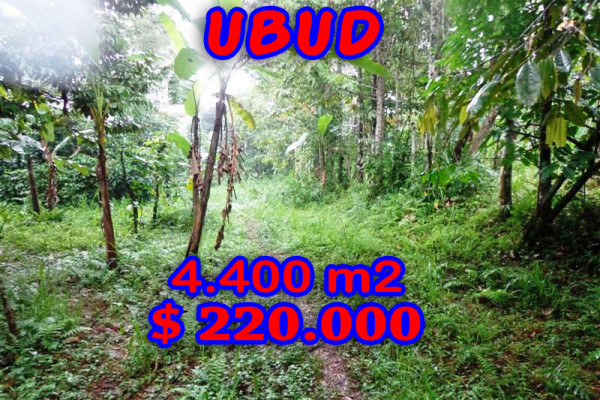 Land in Ubud Bali For sale 44 Ares with Lush and green