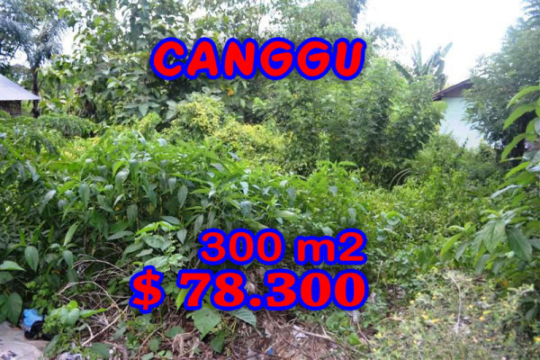 Land for sale in Canggu Bali 300 sqm Stunning view – TJCG100E