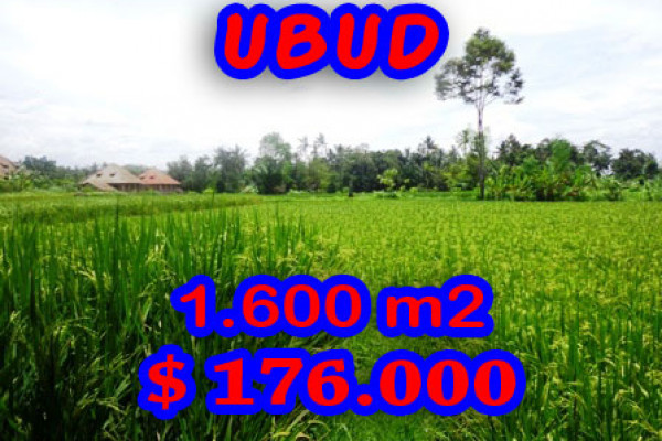 Land for sale in Ubud Bali 16 Ares with rice paddy view – TJUB190E