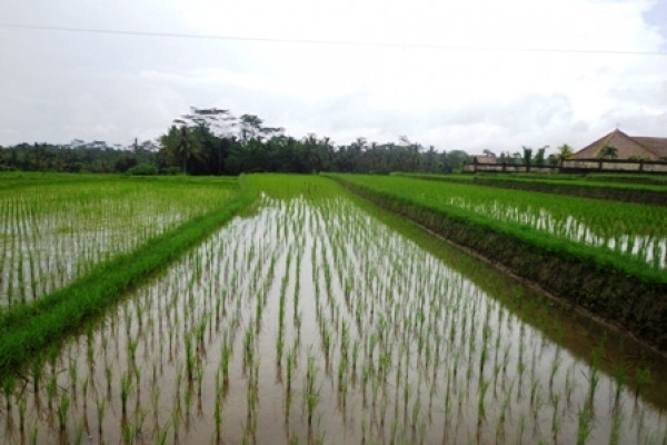Land for sale in Ubud Bali by the roadside  – TJUB172