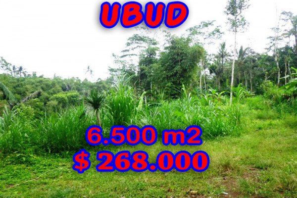 Incredible Property for sale in Bali, land for sale in Ubud Bali  – 6.500 sqm @ $ 41