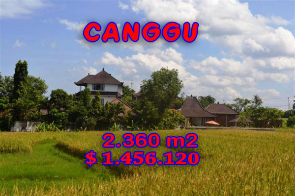Land for sale in Bali, Interesting view in Canggu Bali – 2.360 m2 @ $ 617