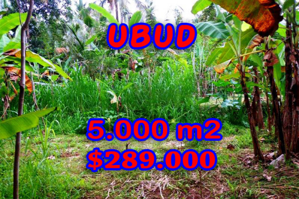 Land for sale in Bali, Outstanding view in Ubud Bali – 5.000 m2 @ $ 58
