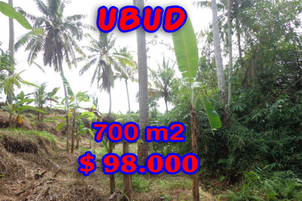 Eye-catching Property in Bali, Land sale in Ubud Bali – 700 m2 @ $ 139