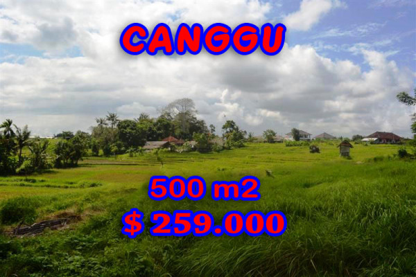 Terrific Property for sale in Bali, land for sale in Canggu Bali  – 500 m2 @ $ 517