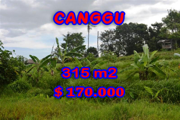 Exceptional Property in Bali, land in Canggu Bali for sale – 315 m2 @ $ 539