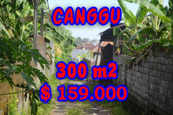 Fabulous Property in Bali, Land for sale in Canggu Bali – 300 m2 @ $ 528