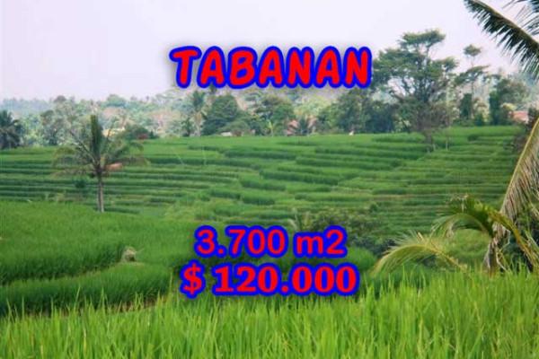 Land for sale in Bali, Incredible property in Tabanan Bali – 3.700 m2 @ $ 39