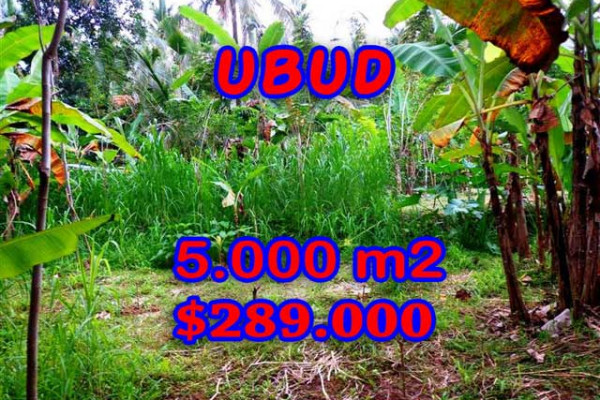 Land for sale in Bali, Spectacular view in Ubud Bali – 5.000 m2 @ $ 58