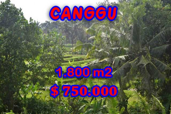 Land for sale in Bali, Spectacular view in Canggu Bali – 1,800 m2 @ $ 417