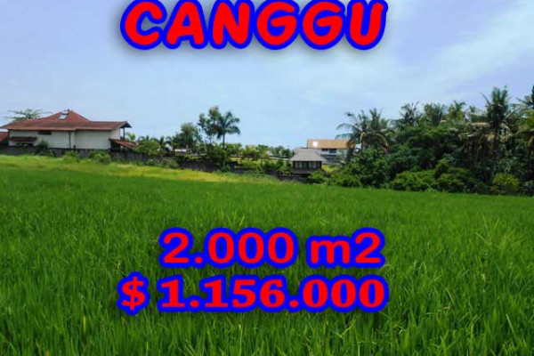 Land for sale in Bali, Magnificent view in Canggu Bali – 2.000 m2 @ $ 578