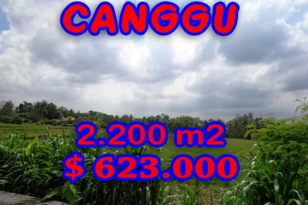 Extraordinary Property in Bali, Land for sale in Canggu Bali – 2.200 m2 @ $ 283