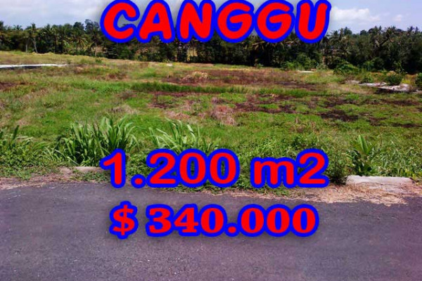 Eye-catching Property in Bali, Land sale in Canggu Bali – 1.200 m2 @ $ 283
