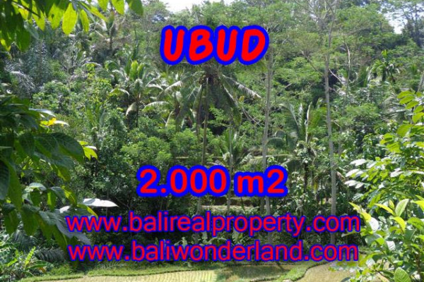 Land for sale in Bali, Interesting view in Ubud Bali – 2.000 m2 @ $ 100