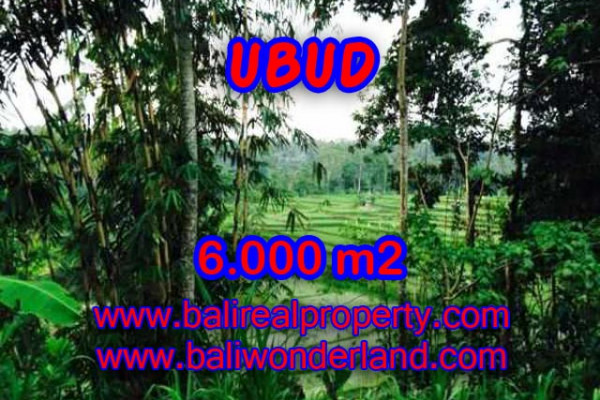 Magnificent Property in Bali, Land for sale in Ubud Bali – 6.000 m2 @ $ 600
