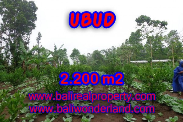 Attractive Property for sale in Bali, Ubud land for sale – 2.200 m2 @ $ 75