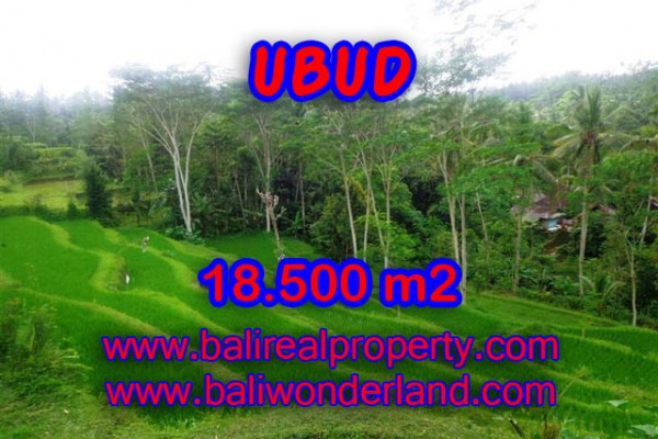 Attractive Property for sale in Bali, Ubud land for sale – 18,500 m2 @ $ 106