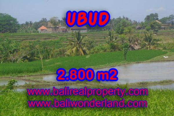 Exotic Property in Bali, Land sale in Ubud Bali – 2.800 m2 @ $ 245