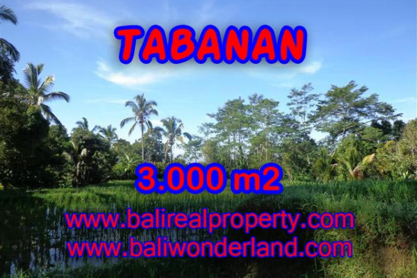 Splendid Property for sale in Bali, LAND FOR SALE IN TABANAN Bali  – 3.000 m2 @ $ 17