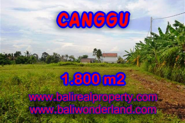 Terrific Property for sale in Bali, LAND FOR SALE IN CANGGU Bali  – 1.800 m2 @ $ 475