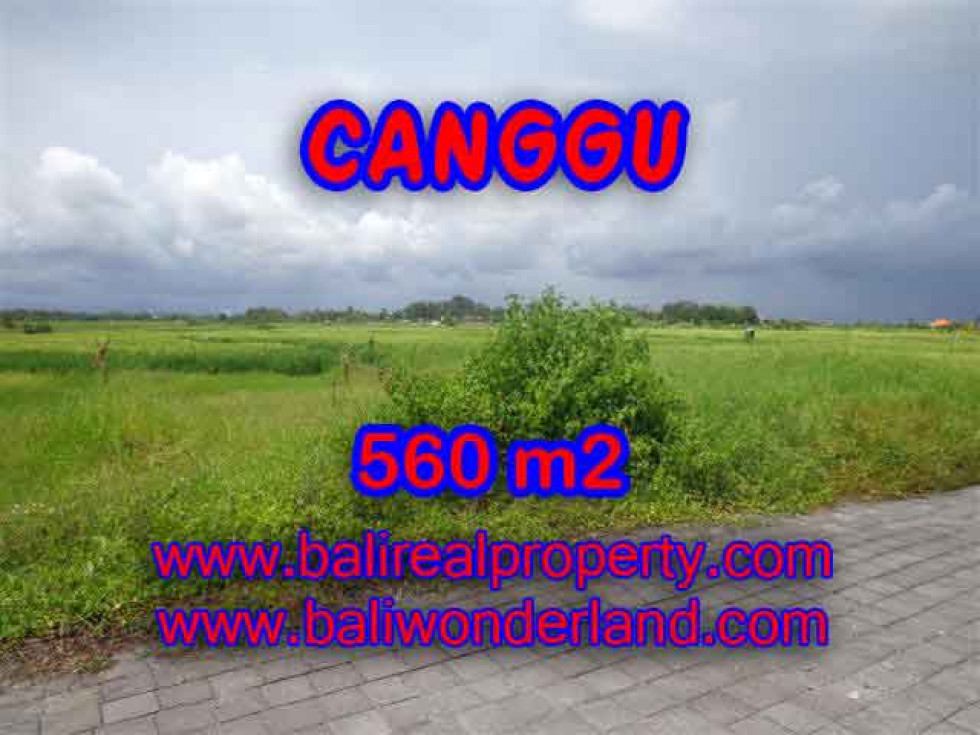 Beautiful Property for sale in Bali, land for sale in Canggu Bali – 560 m2 @ $ 600