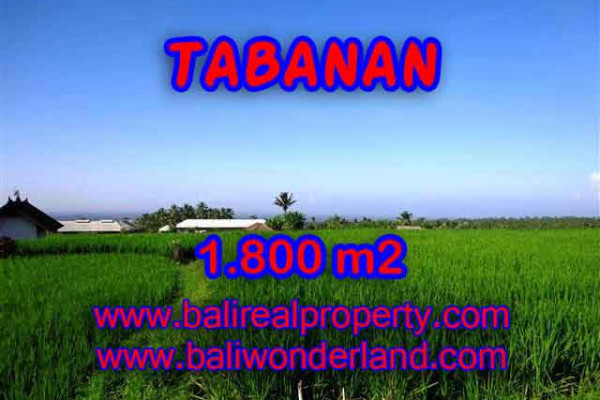 Beautiful Property for sale in Bali, land for sale in Tabanan Bali  – 1.800 m2 @ $ 55