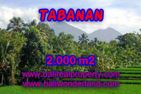 Astonishing Property in Bali, Land for sale in Tabanan Bali – 2.000 m2 @ $ 50