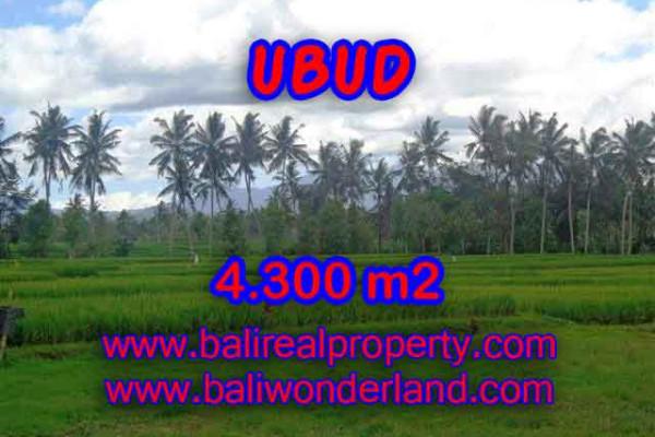 Splendid Property for sale in Bali, LAND FOR SALE IN UBUD Bali – 4.300 m2 @ $ 235